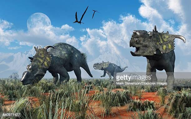 A herd of Pachyrhinosaurus dinosaurs.