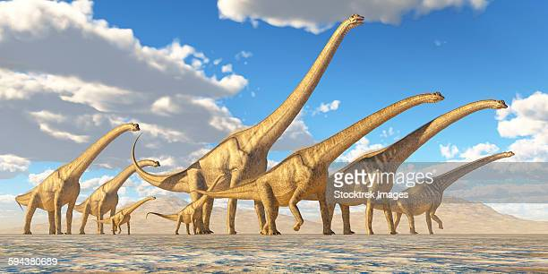 A herd of Sauroposeidon dinosaurs travel together in search of water and vegetation to eat.