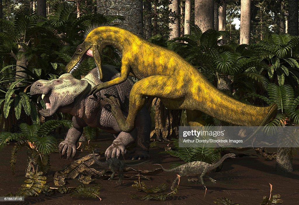 Herrerasaurus, an early dinosaur, attacks a dicynodont. : stock illustration