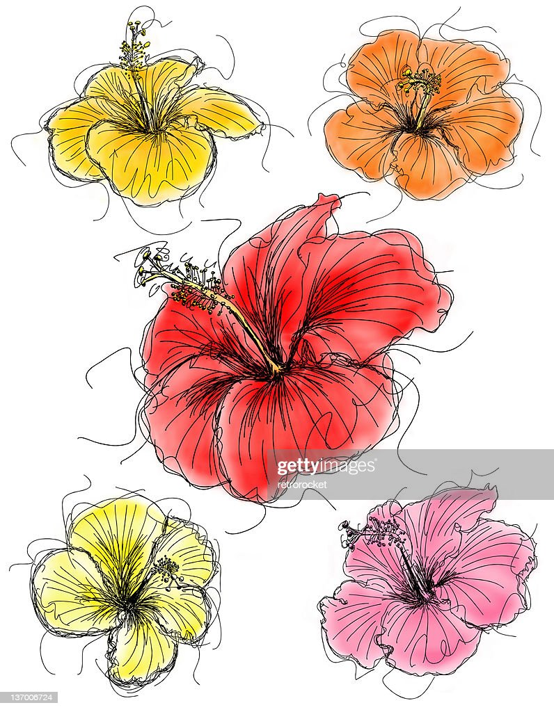 Hibiscus flower sketches stock illustration getty images hibiscus flower sketches stock illustration izmirmasajfo