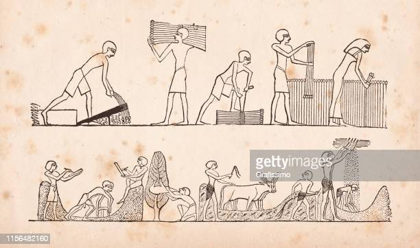 hieroglyphics of egypt farmers milling cutting millet working the field - ancient egyptian culture stock illustrations