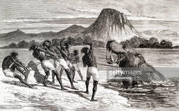 Hippopotamus hunt in Africa
