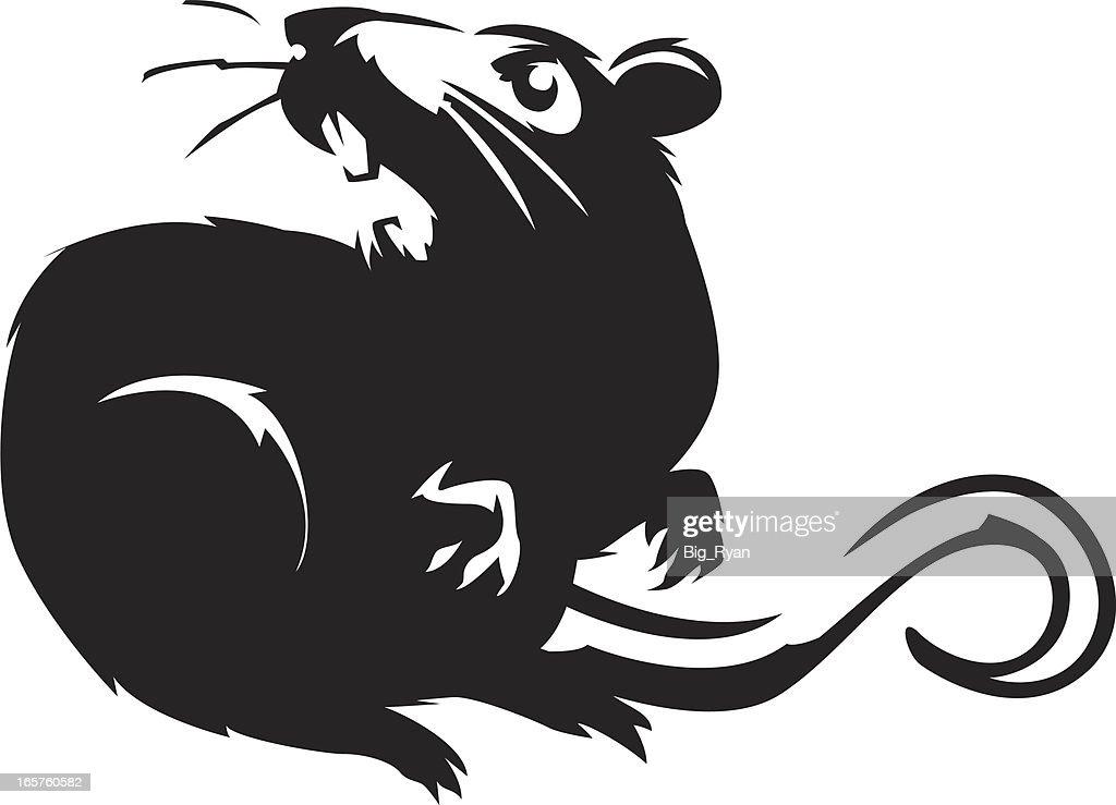 hissing rat