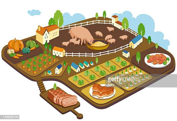 hog farm to production - pigs trough stock illustrations