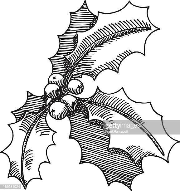 illustrations, cliparts, dessins animés et icônes de holly brindille décoration de noël dessin - houx