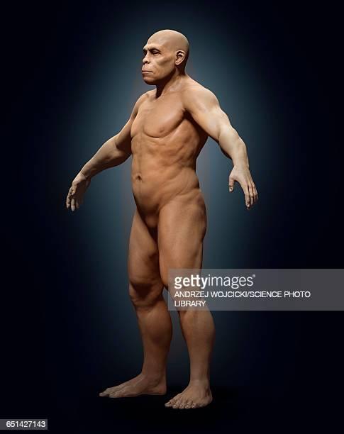 Homo erectus, illustration