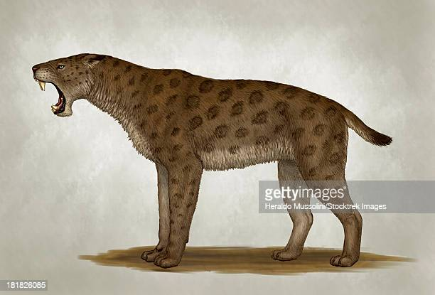 Homotherium latidens, a big sabertooth cat of the Pliocene Epoch.