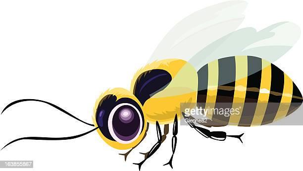 honeybee - one animal stock illustrations
