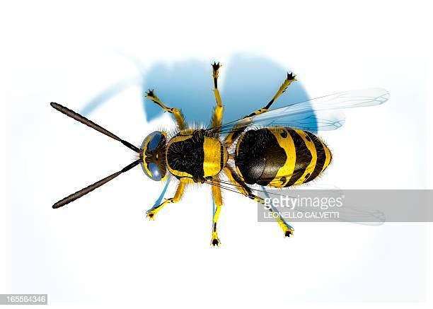 illustrazioni stock, clip art, cartoni animati e icone di tendenza di hornet, artwork - calabrone