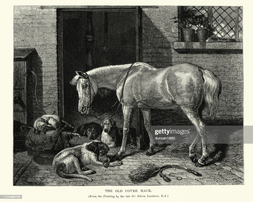 Horse And Dogs Old Cover Hack After Edwin Landseer High Res Vector Graphic Getty Images