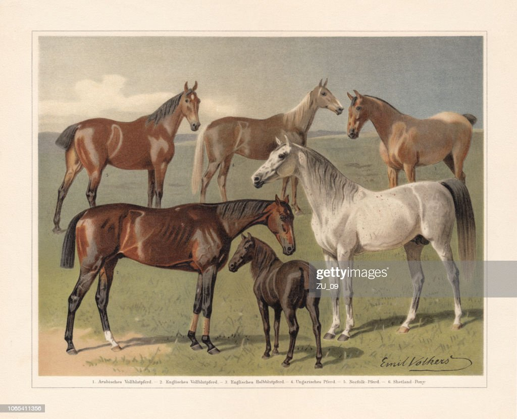 Horse breeds, chromolithograph, published in 1897 : stock illustration