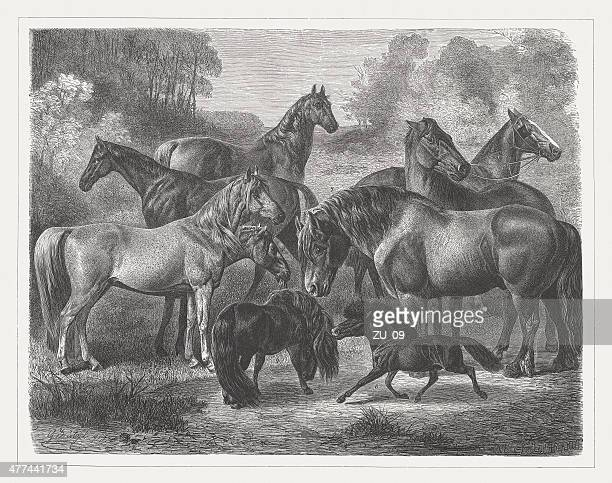 horse breeds, wood engraving, published in 1877 - arabian horse stock illustrations, clip art, cartoons, & icons