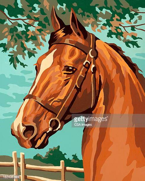 horse - one animal stock illustrations