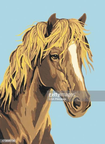 ilustrações, clipart, desenhos animados e ícones de cavalo - animal mane