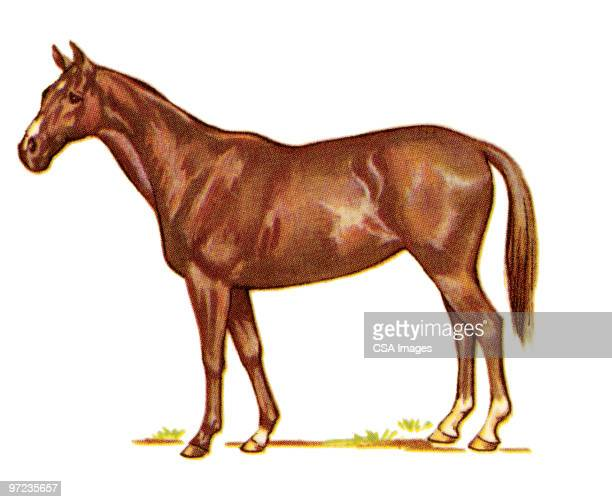 horse - horse stock illustrations