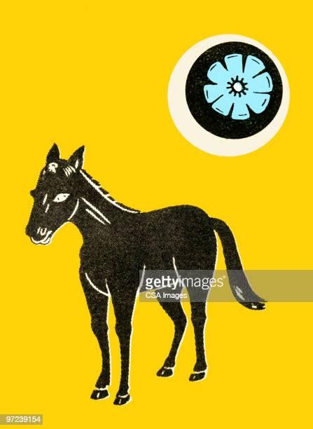ilustraciones, imágenes clip art, dibujos animados e iconos de stock de horse - donkey