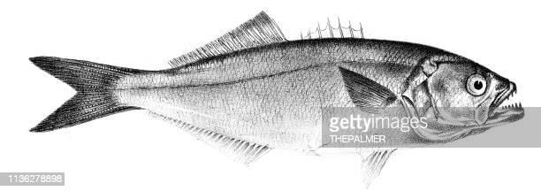 さばの魚の刻印1842 - オキスズキ点のイラスト素材/クリップアート素材/マンガ素材/アイコン素材