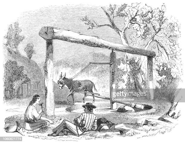 Horse Mill in Bear Valley, California, USA (19th Century)