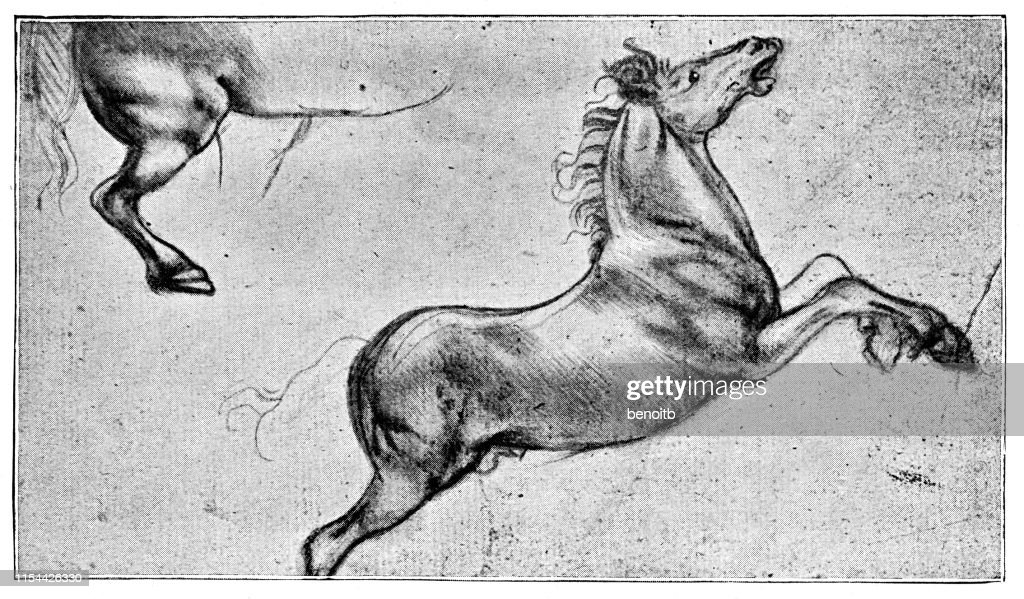 Horse Sketch By Leonardo Da Vinci High Res Vector Graphic Getty Images