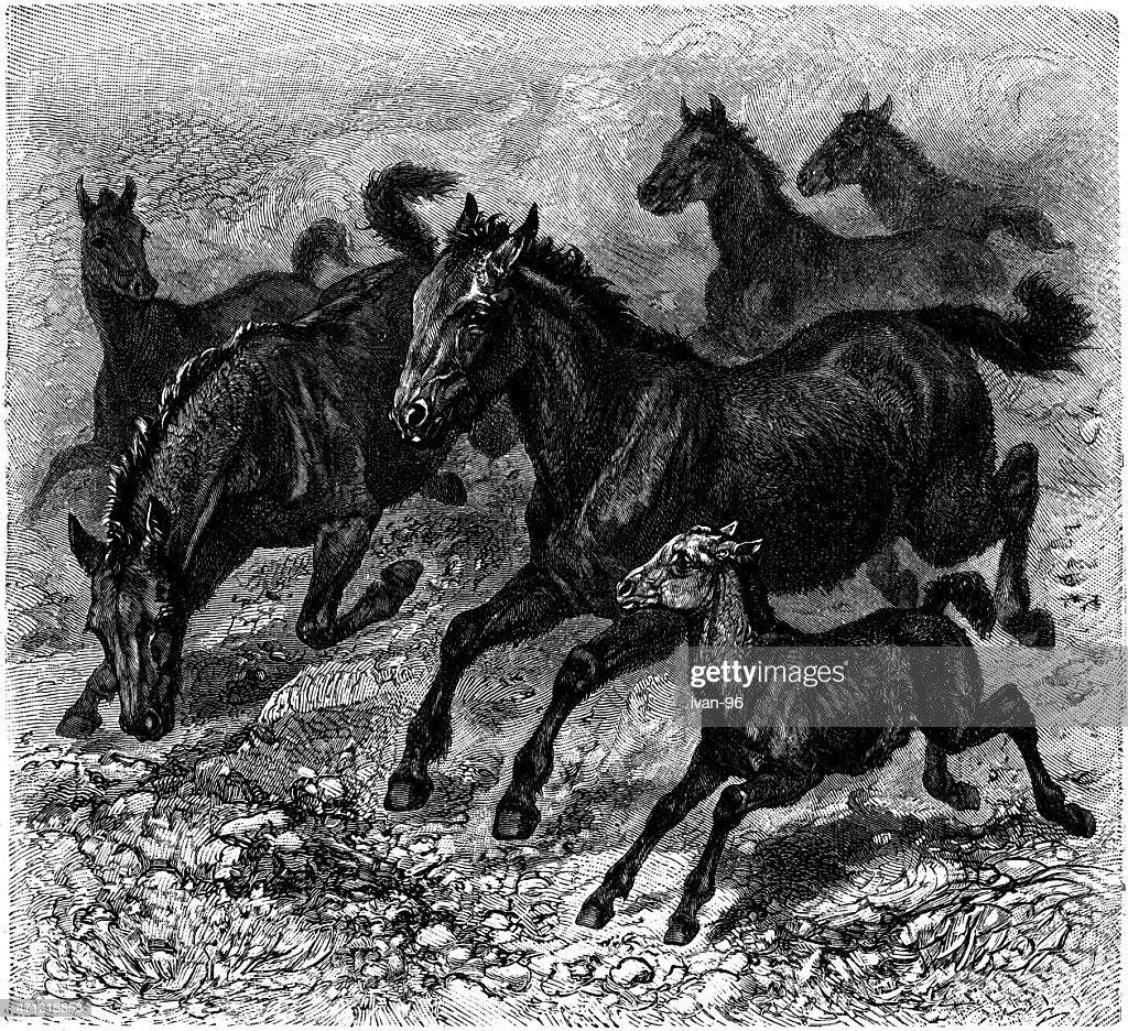 horses : stock illustration