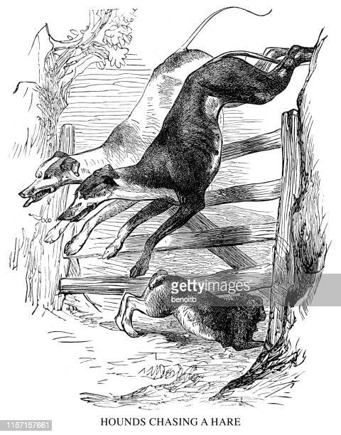 hounds chasing a hare - hound stock illustrations