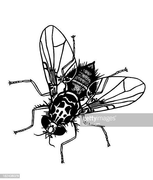 ilustraciones, imágenes clip art, dibujos animados e iconos de stock de mosca doméstica - parte del cuerpo animal