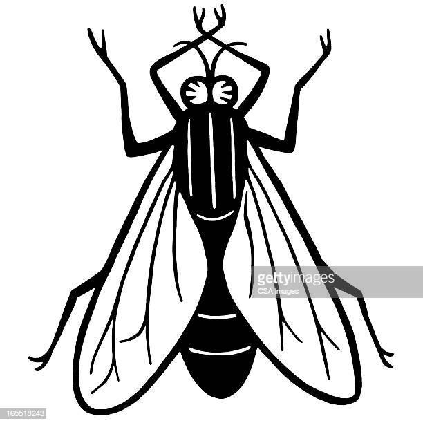 housefly - fly insect stock illustrations, clip art, cartoons, & icons