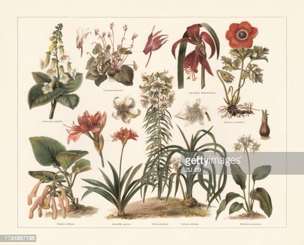 illustrations, cliparts, dessins animés et icônes de plantes d'intérieur, chromolithographe, publié en 1897 - plante verte