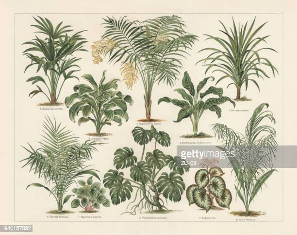 houseplants, lithograph, published in 1897 - tropical bush stock illustrations
