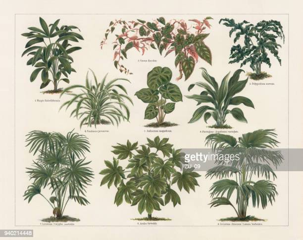 Houseplants, lithograph, published in 1897