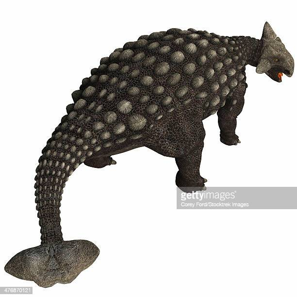 A huge armored dinosaur, Ankylosaurus was a herbivore from the Cretaceous Period.