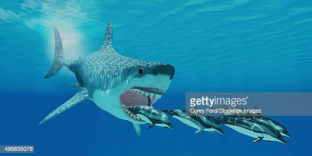 A huge Megalodon shark swims after a pod of striped dolphins.