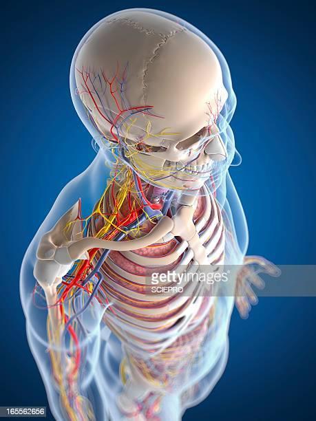 human anatomy, artwork - physiology stock illustrations, clip art, cartoons, & icons