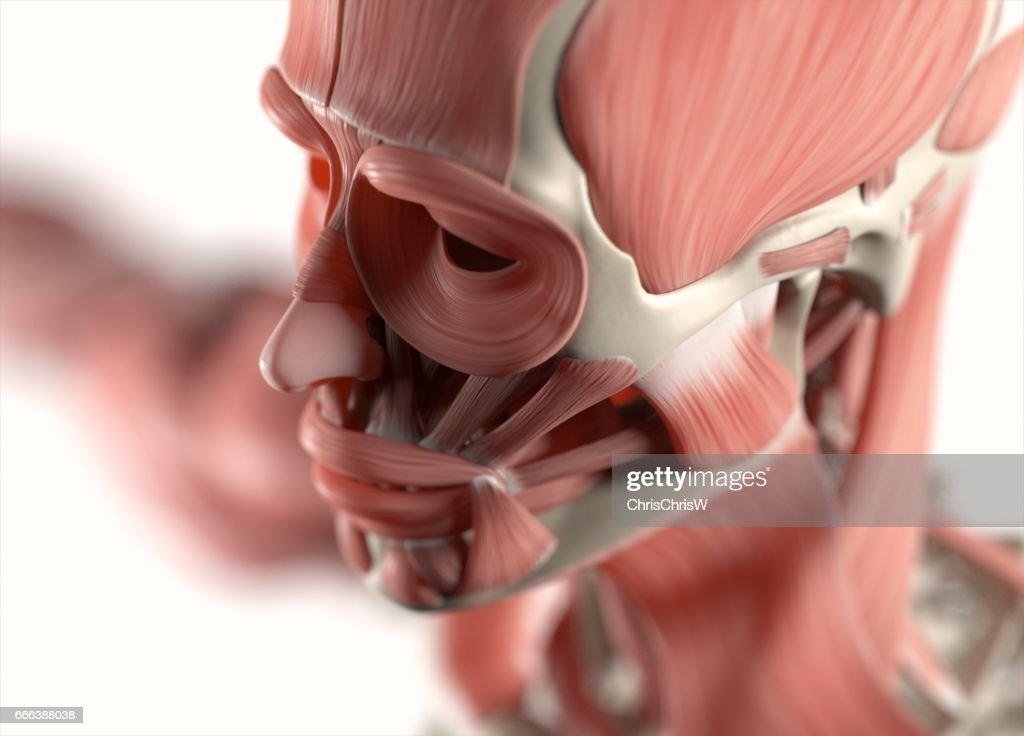 Menschliche Anatomie Körper Muskel Und Skeletterkrankungen System ...