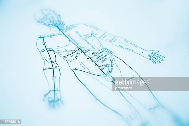 human anatomy - acupuncture stock illustrations, clip art, cartoons, & icons
