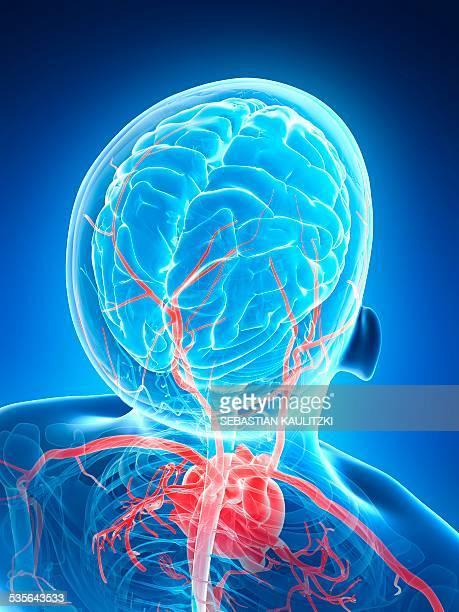 human blood vessels, illustration - blood flow stock illustrations