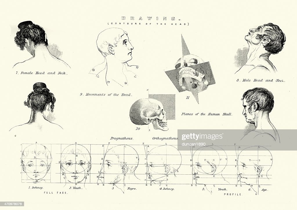 Human Body Contours Of The Head Stock Illustration   Getty Images
