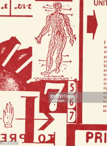 human body diagram, numbers - image stock illustrations