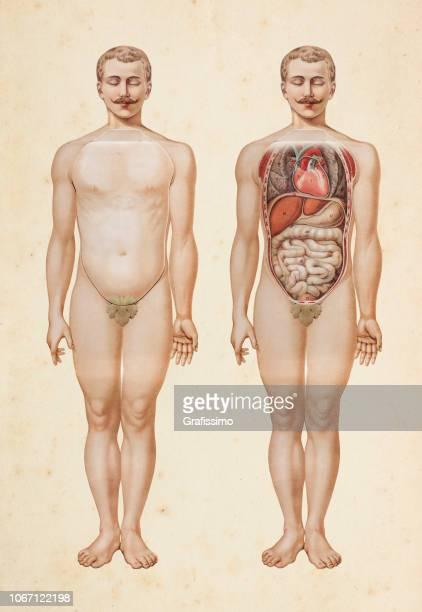 人間の体の内部器官の図 - 人体構造点のイラスト素材/クリップアート素材/マンガ素材/アイコン素材