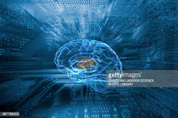 Human brain and circuit board
