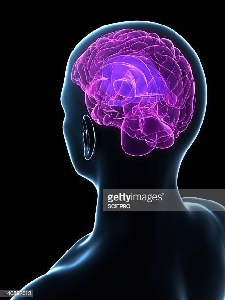 human brain, artwork - eeg stock illustrations