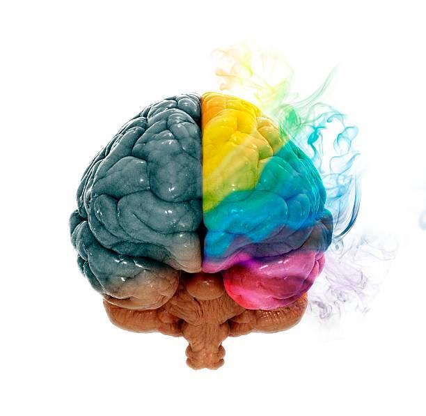 Human Brain, Artwork Wall Art