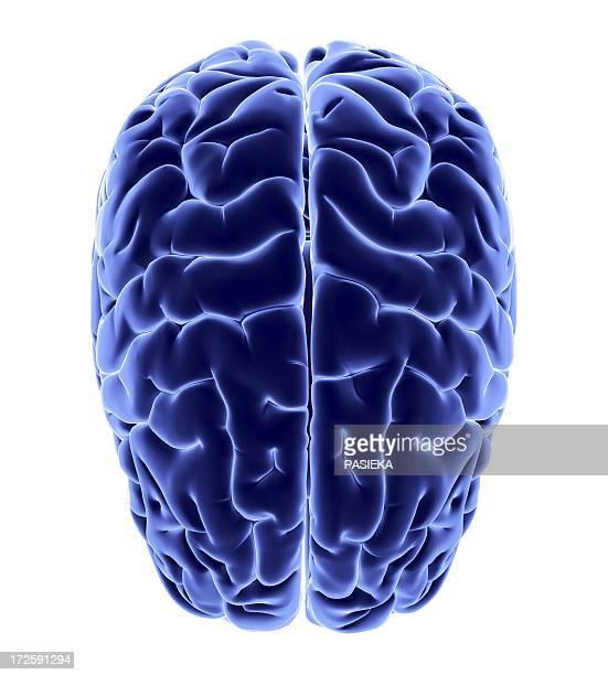 human brain, artwork - neuroscience stock illustrations
