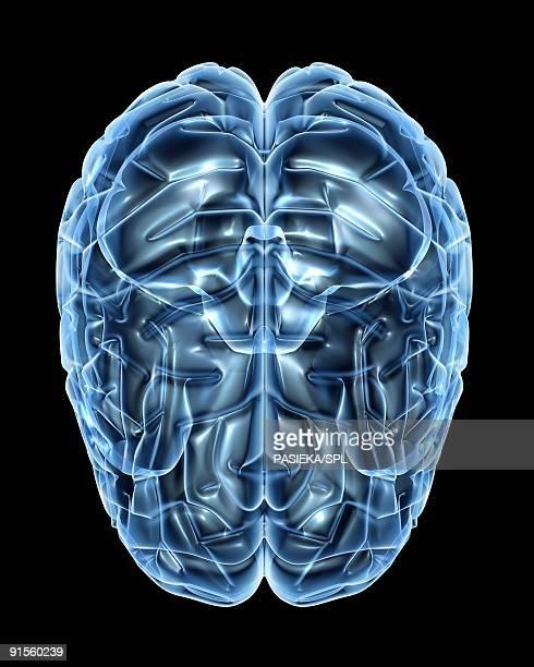 human brain, computer artwork - neuroscience stock illustrations