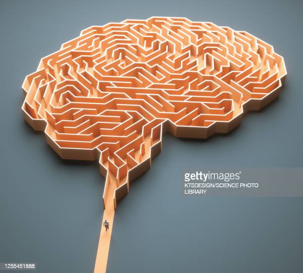 human brain, conceptual illustration - lösung stock-grafiken, -clipart, -cartoons und -symbole