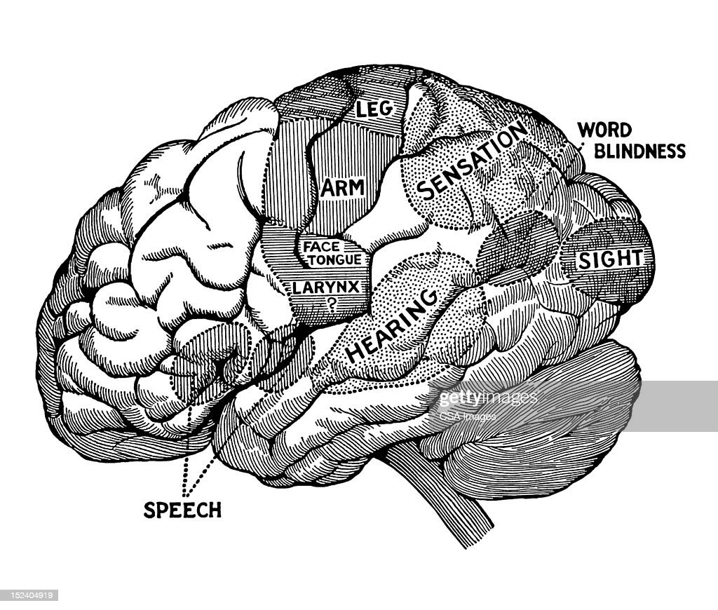Human Brain Diagram stock illustration - Getty Images