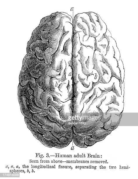 人の脳 - 人体図点のイラスト素材/クリップアート素材/マンガ素材/アイコン素材