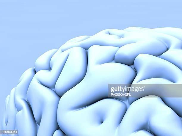 human brain - cerebral cortex stock illustrations