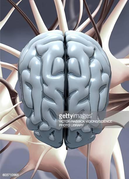 human brain, illustration - victor habbick stock illustrations