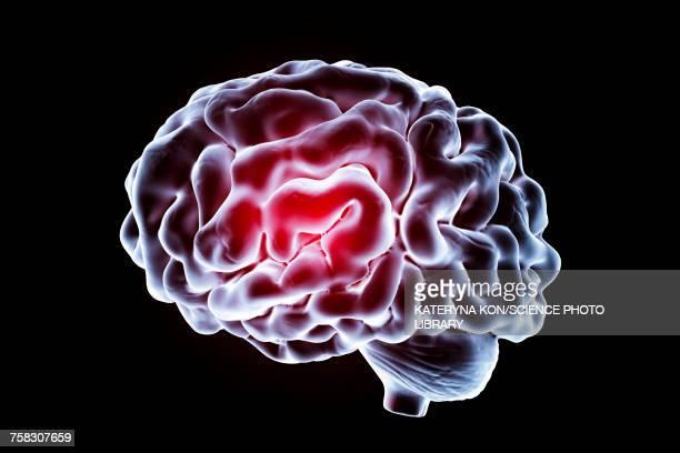 ilustrações de stock, clip art, desenhos animados e ícones de human brain, illustration - sistema nervoso central